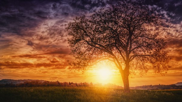Sunset Nature Trees, HD Nature, 4k Wallpapers, Images ...