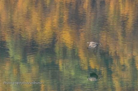 Norwegian Sea Eagle