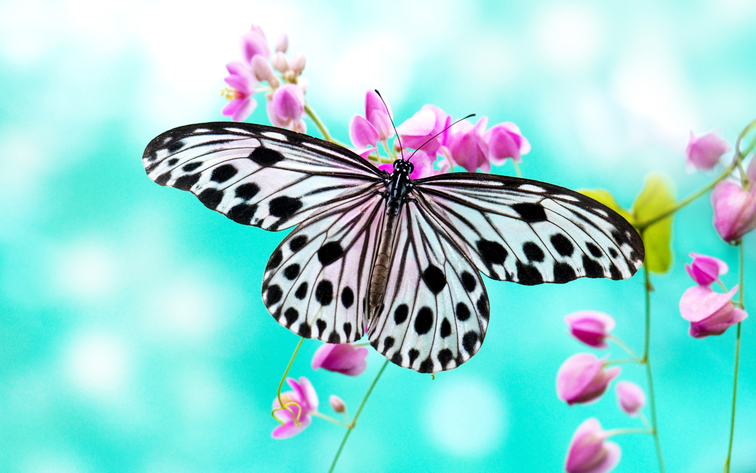 Butterfly 4k Wallpaper Download Hd And 4k Wallpaper Collections