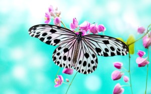 Beautiful 4K Butterfly background image