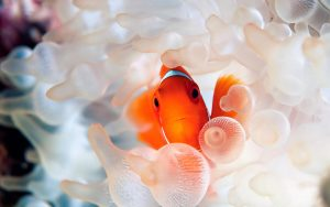 Coral-Reef-Fish-wallpaper
