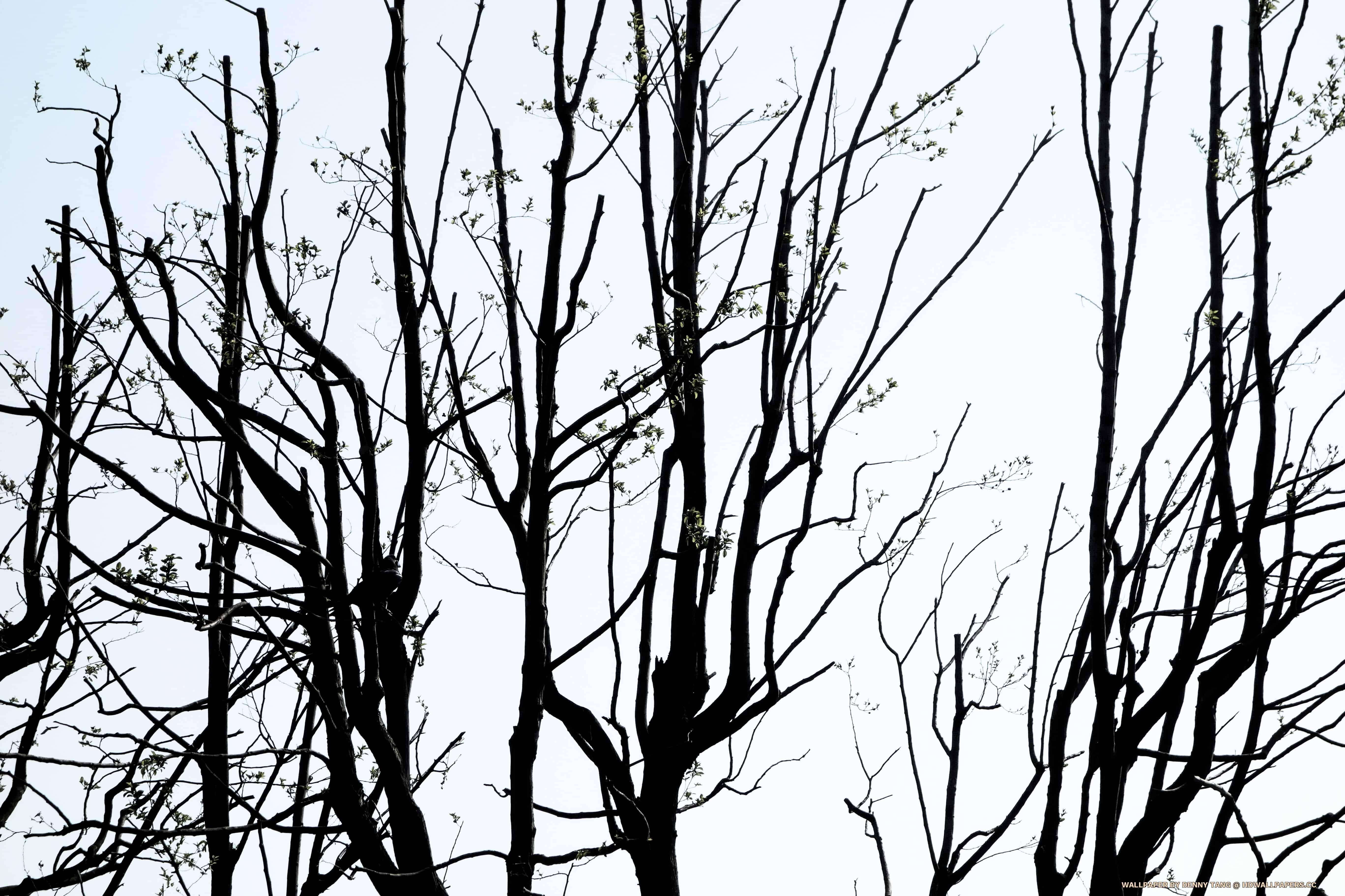 branches hd wallpapers HD Landscape Wallpaper 1920X1080 5k 5120px