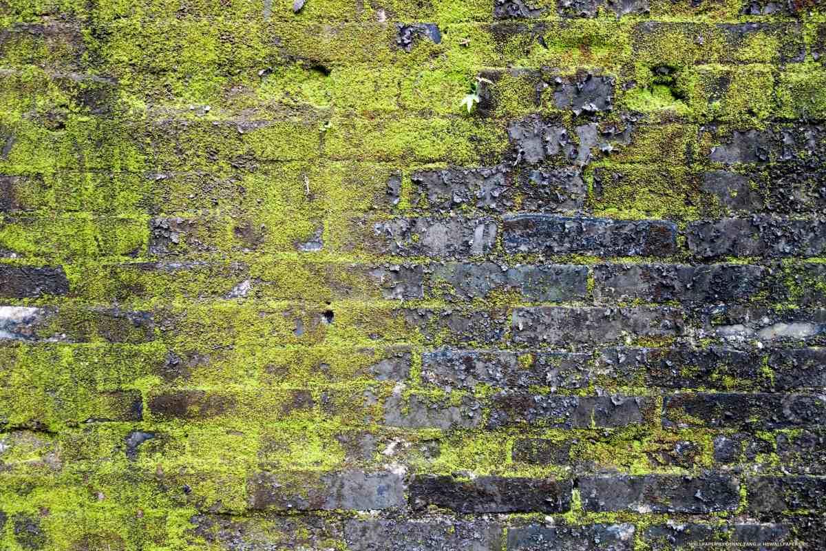 Mossy Brick Wall