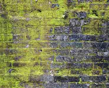 Mossy-Brick-Wall