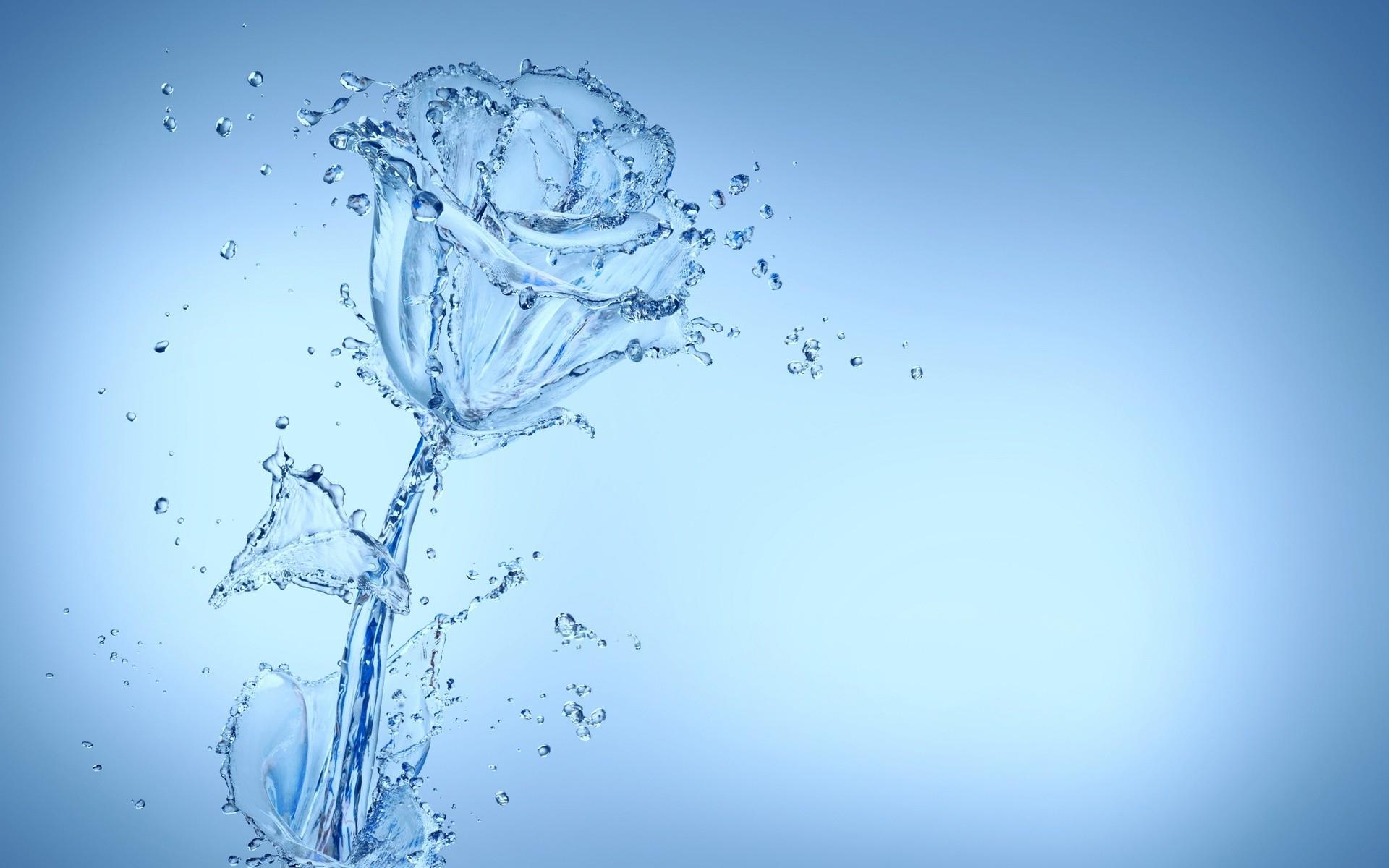 cool water flower wallpaper 37544 1920x1200 px ~ hdwallsource