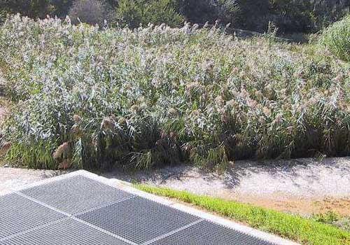 Station d'épuration à filtres plantés de roseaux 500 E.H. HEA Pau 64
