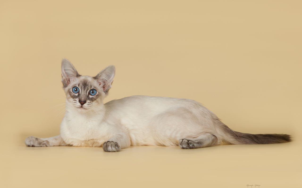 Docela tuku mačička pics