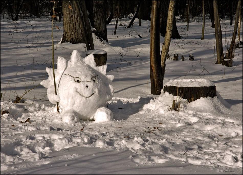 性格开朗的刺猬在森林里,盲目从雪