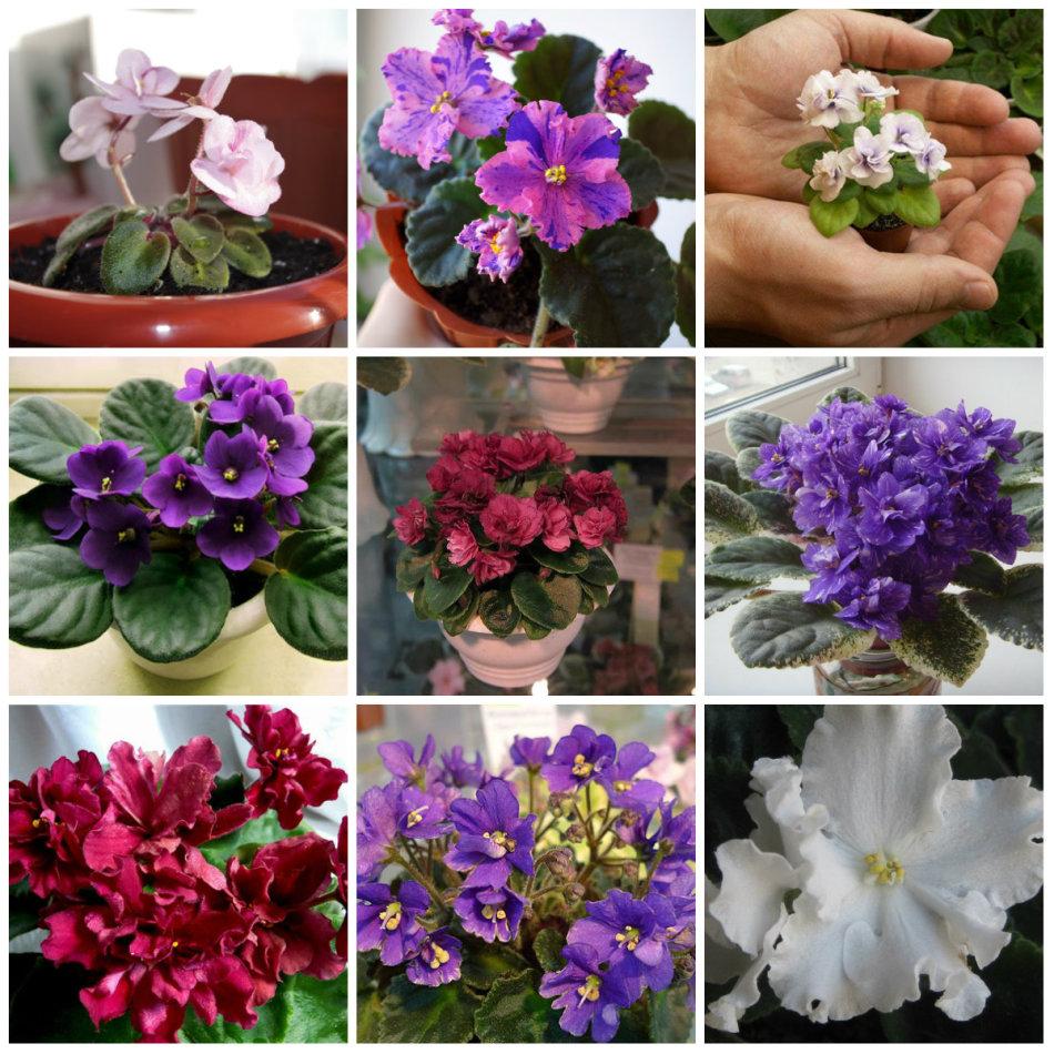 Künstliche Orchidee Blume Anordnung Bonsai Blume Nur Keine Vase Krankheiten Zu Verhindern Und Zu Heilen Festliche & Party Supplies