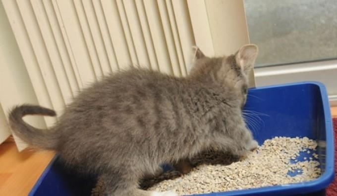 Mačička striekať strana