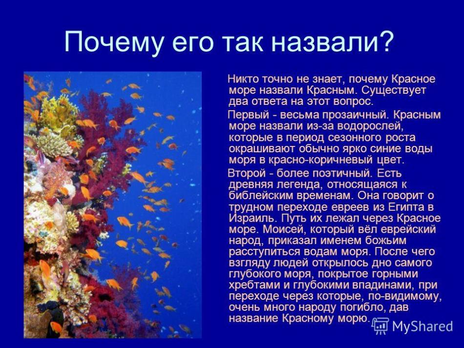Slide with a photo of underwater inhabitants near coral and text about the origin of the name of the Red Sea