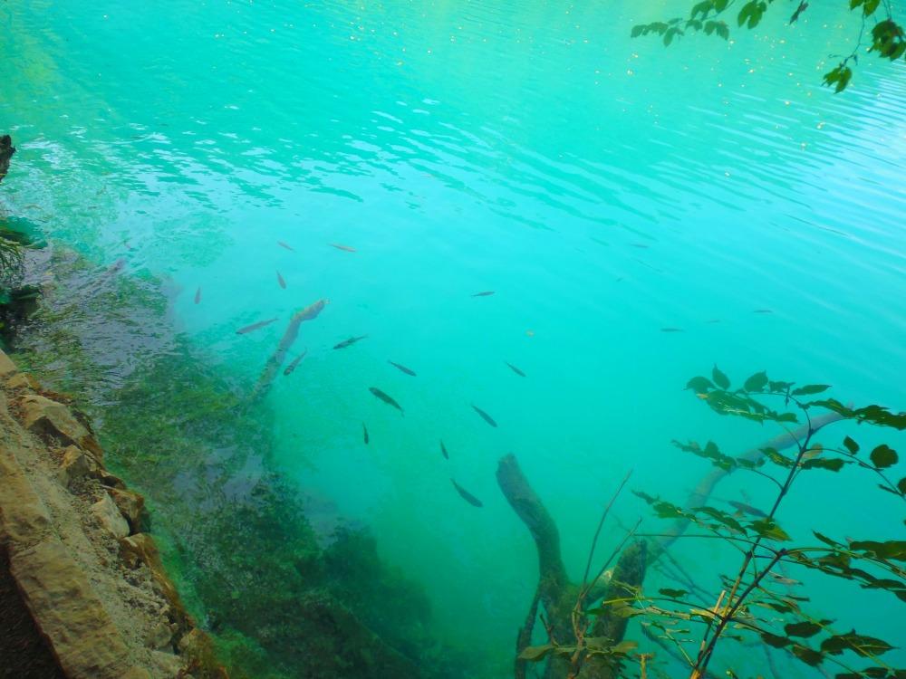 rybki w Jeziorach Plitwickich w Chorwacji