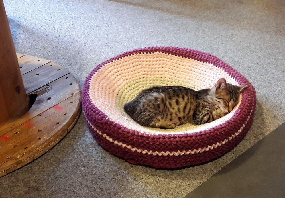 co robić zimą - iść do kociej kawiarni - śpiący kot w kociej kawiarni