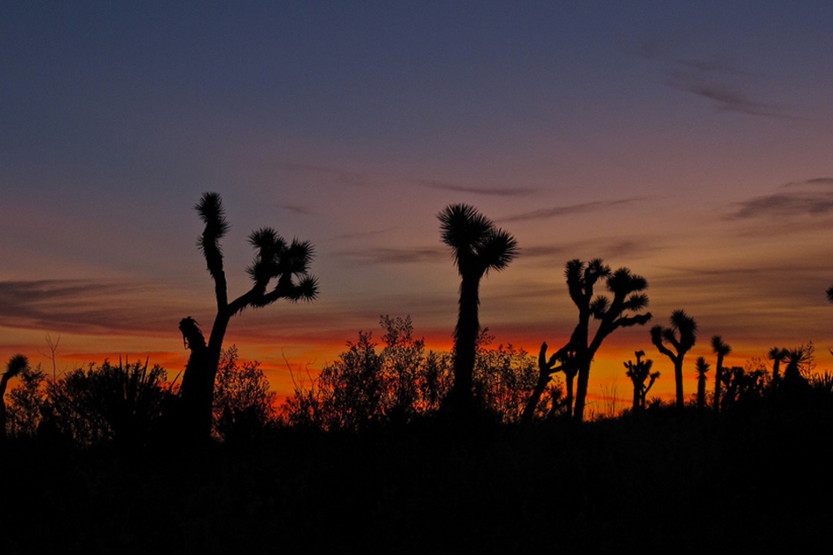 Joshua Tree National Park at Dawn