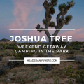 Joshua Tree in field at sunset with pink clouds. Pinterest Image