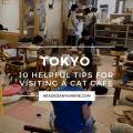 Tokyo Cat Cafe Tips