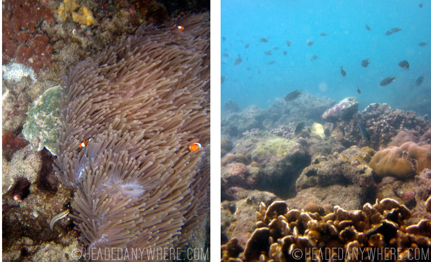 Left: Clown Fish in Anemones Right: Coral and a school of fish