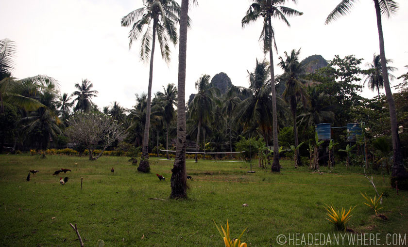 Field in Railay