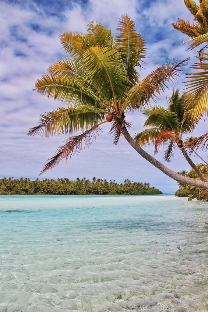 Palm Tree over lagoon on One Foot Island in Aitutaki, Cook Islands