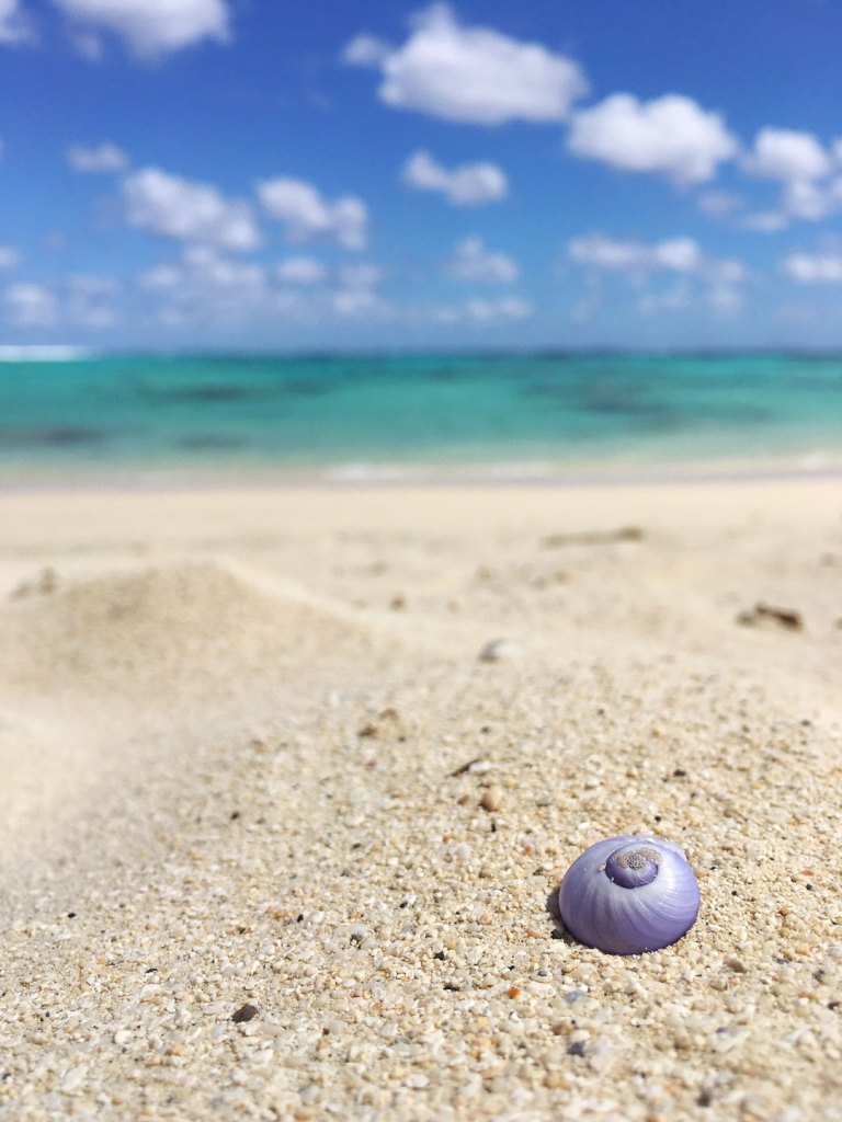 Purple sea shell in Titikaveka beach on Rarotonga, Cook Islands