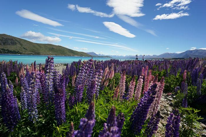 Lake Tekapo New Zealand Road Trip