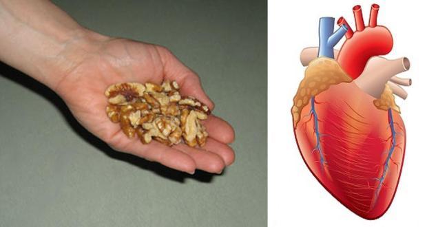 walnut-health-benefits