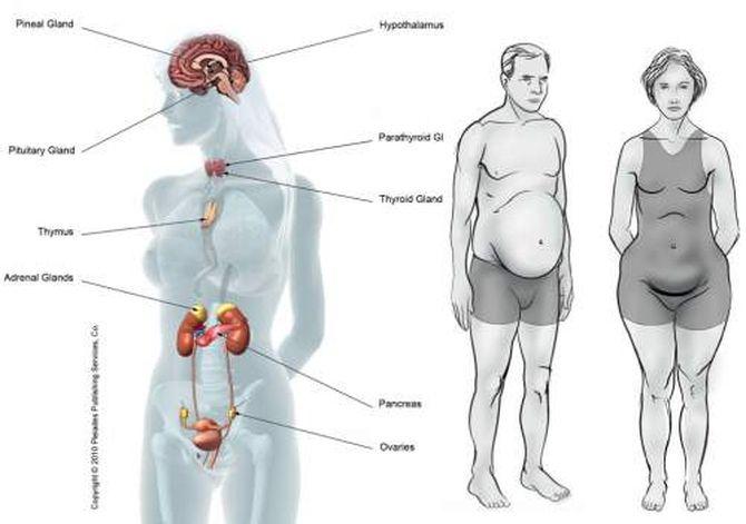 foodsthatcausehormonalimbalance-1450900089kg84n_result