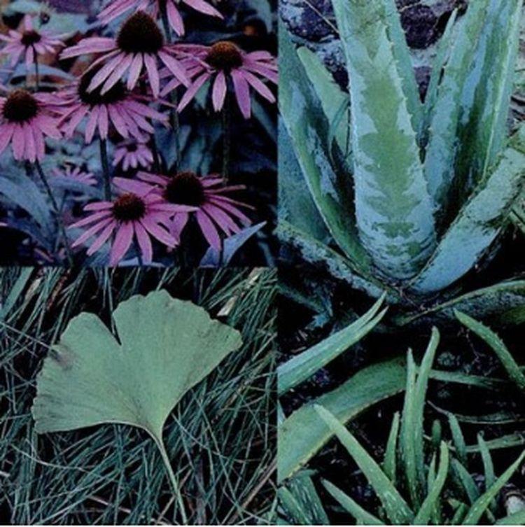 Любите травы и витамины? Эти могут причинить вред здоровью