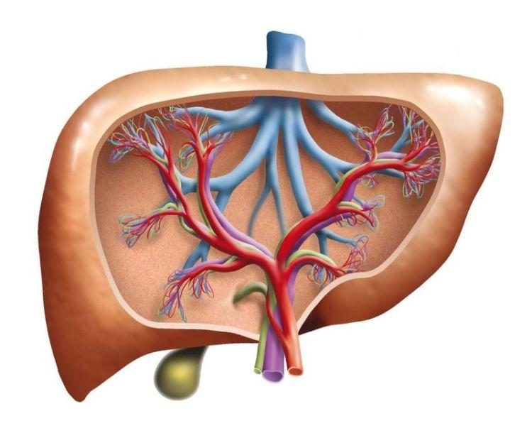 Детоксикация внутреннего органа по переработке ядов: 6 самых полезных для печени продуктов питания