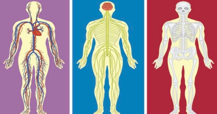 Анатомический тест на знание собственного тела, с которым могут справиться лишь 3% мужчин