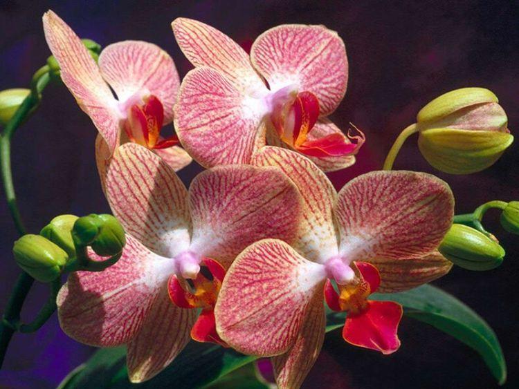 Чтобы цвела подольше или круглый год: 9 простых правил правильного ухода за орхидеей