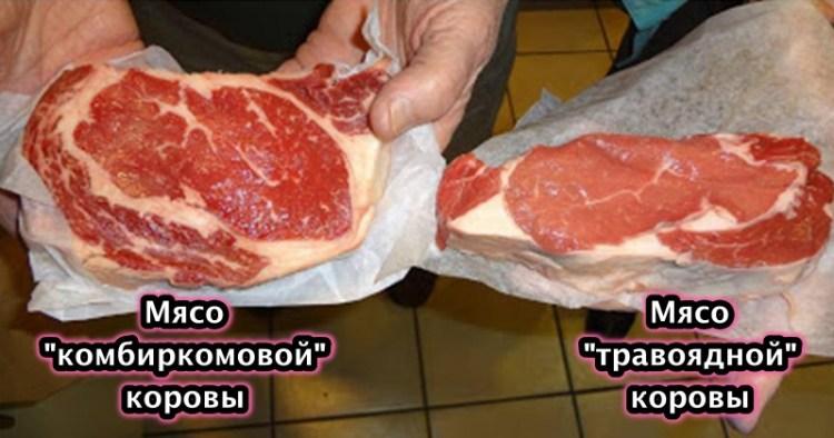 """Как не ошибиться в выборе натуральной говядины и купить мясо от """"травоядной"""" коровы"""
