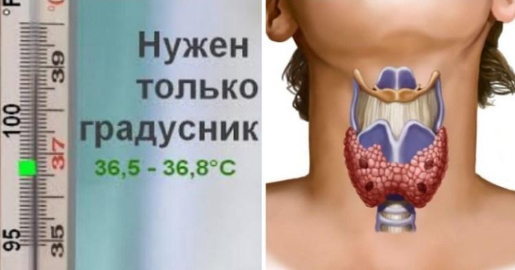 Обычный градусник и пара простых шагов: путь к определению состояния щитовидки