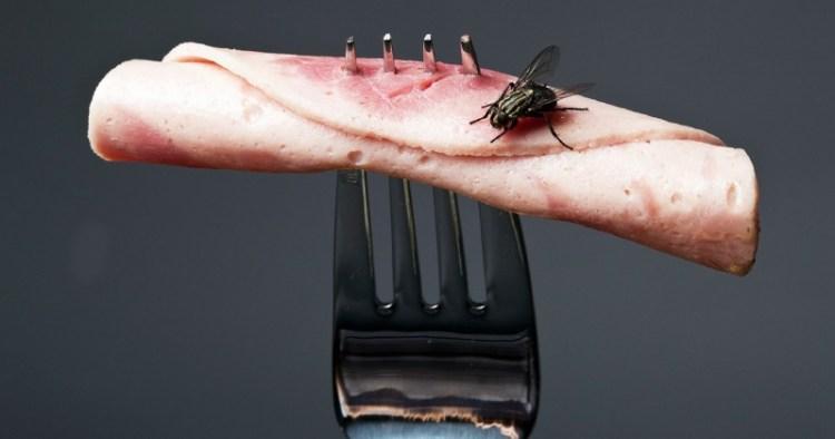 Еда как биологическое оружие, или почему стоит обходить стороной продукты, на которые садилась муха