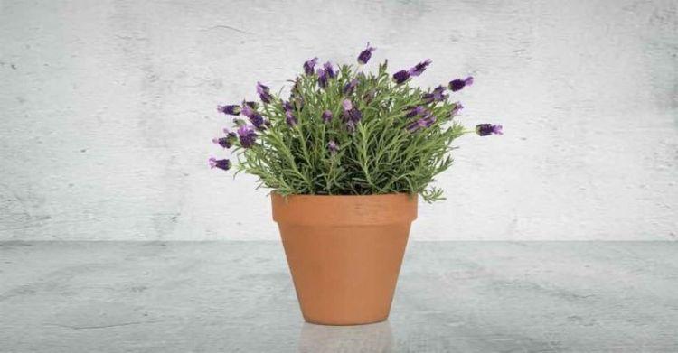 Цветы для спальни: какие комнатные растения убаюкивают и помогают хорошенько выспаться