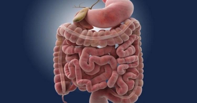 От болезни Крона до камней в желчном пузыре: почему болит живот после еды