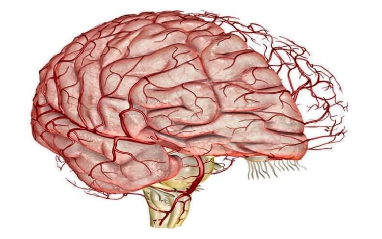 Дышите-не дышите: улучшаем кровообращение в мозге путем задержки дыхания