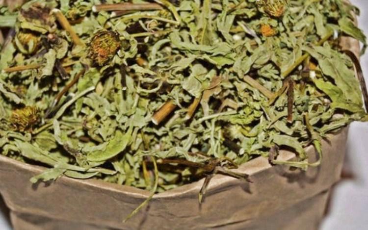 Как стать чище с чередой: простой рецепт чая для очищения крови и сосудов
