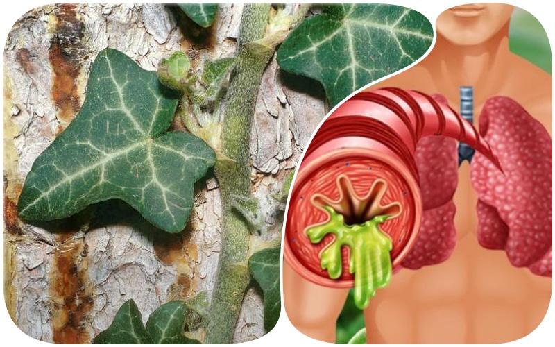 Когда замучил кашель, нужно обязательно принимать отхаркивающие средства. Предлагаемые в статье средства от кашля совершенно натуральны. Лечение кашля ими оказывает смягчающее и успокаивающее действие. Мокрота при кашле легко отходит.