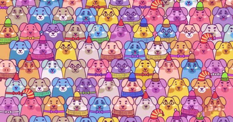 Сможете ли вы найти среди собак символ 2019 года за несколько секунд