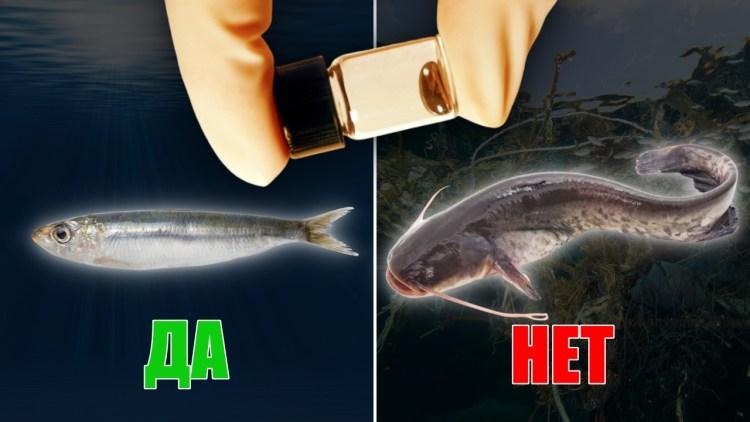 Какая рыба самая полезная, а какая полна ртути: советы от эксперта мирового уровня
