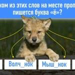 Справитесь ли вы с 10 вопросами теста ЕГЭ по русскому языку?