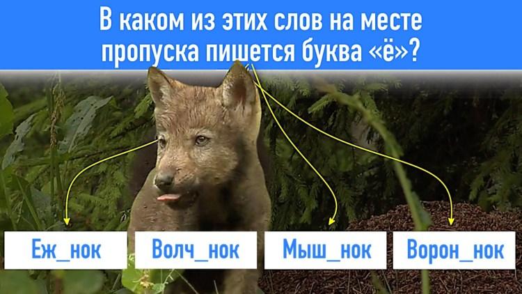 Проверяем, сможете ли вы сдать экзамен по русскому языку: 10 вопросов на грамотность