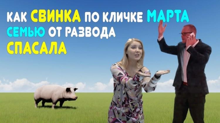 Как свинка по кличке Марта семью от развода спасала: реальная и поучительная история из жизни