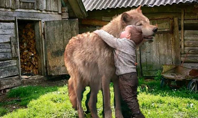 Люди бросились к ребенку, но волк оскалил клыки и зарычал, никого не подпуская к своему другу