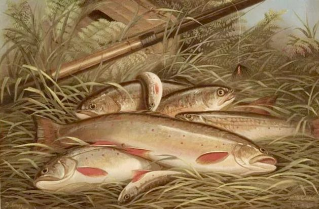 Brook Trout— Currier and Ives