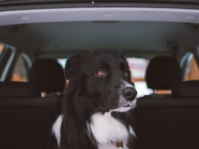 train your dog to ride in a car