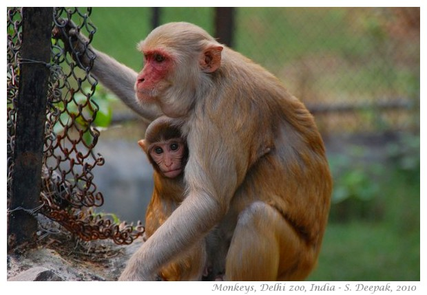Delhi Police files an FIR against a Monkey