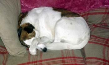Sleeping Penny