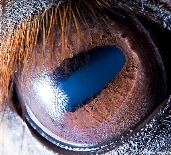horse-close-up-of-eye-macro-suren-manvelyan